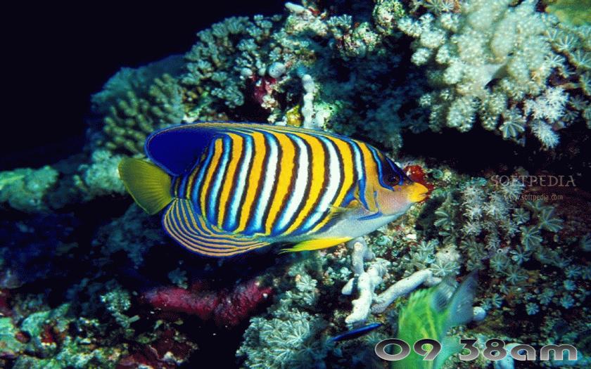 Brightly Colored Fish