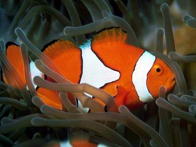 Tropical Fish Pictures on Fish Profiles Information On Tropical Fish And Marine Help For A
