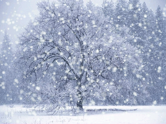 DX Winter Snow Screensaver screenshot 1