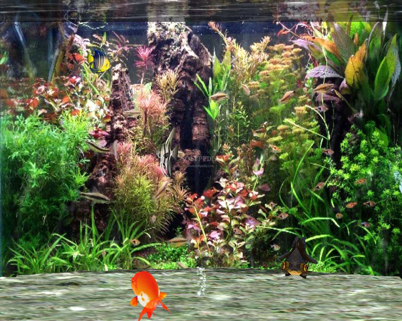 download freeware Screensaver Fantastic 3D Fish Aquarium