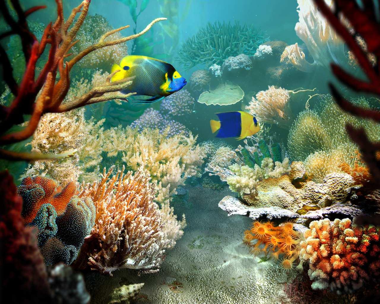fish tropical report
