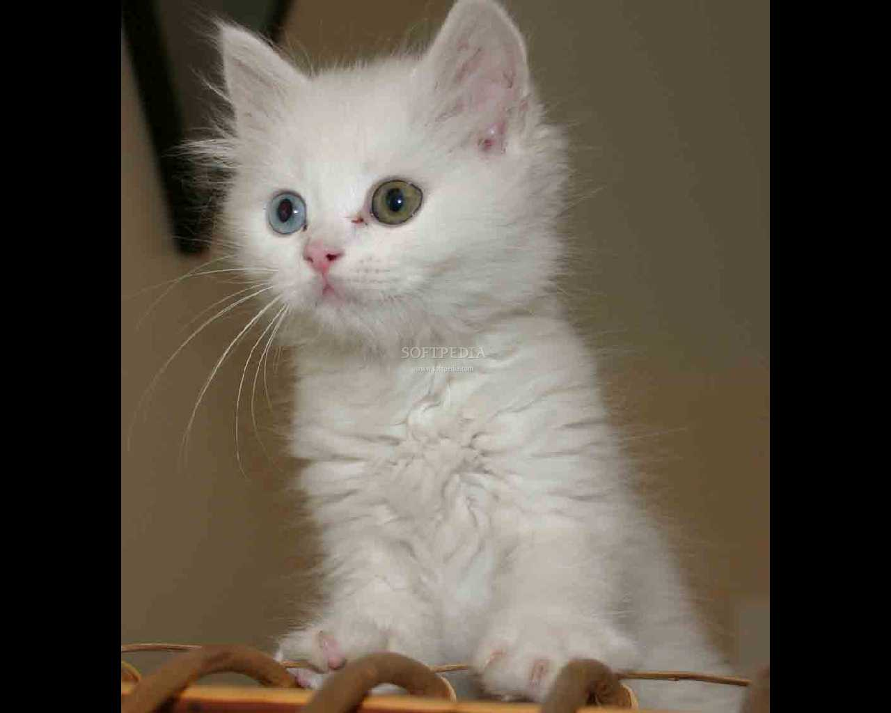 cats white
