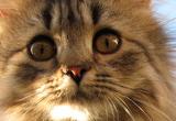 Character Stuff Warrior-Cats-Screensaver-thumb